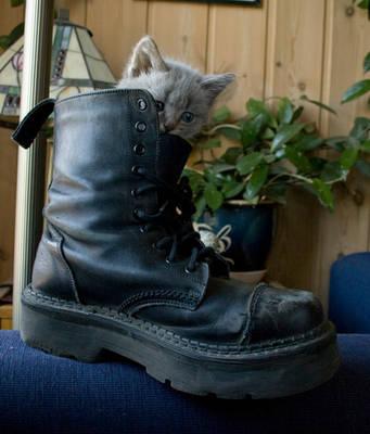 Kitten Shoe by RandomResources
