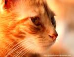 Pumpkin III by jimkarthauser
