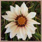 Hearty Flowers...