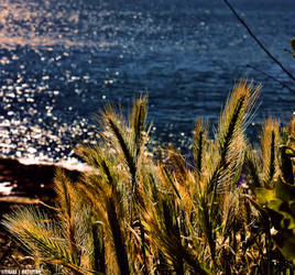 Ocean .......