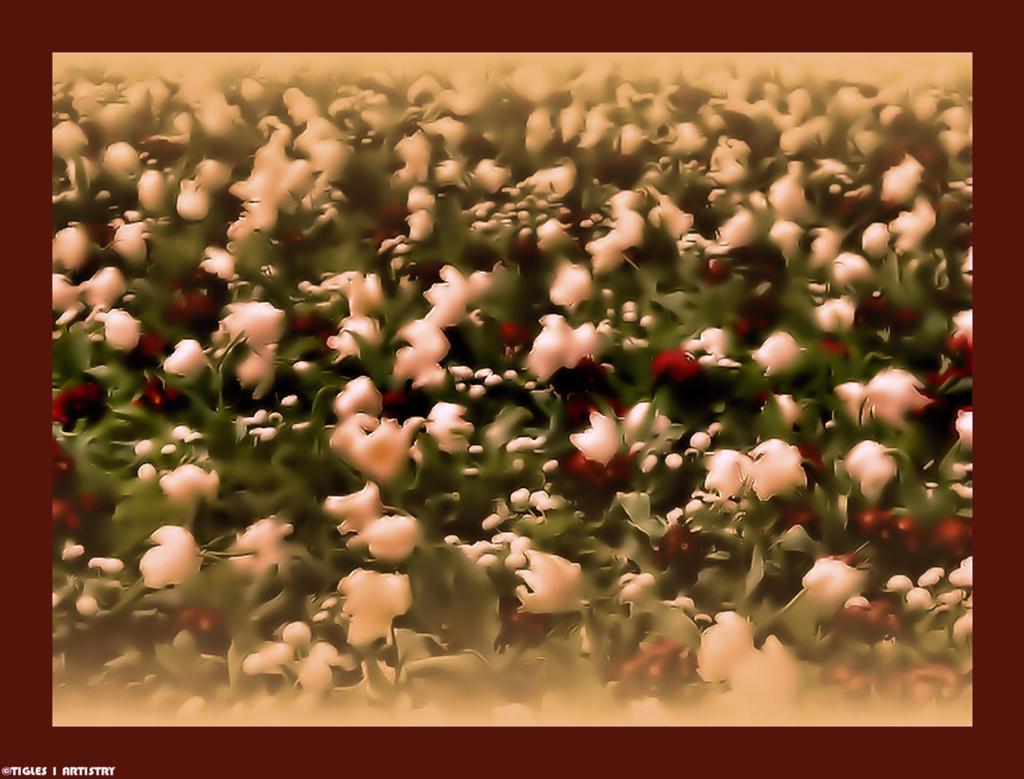 My Interpretation of Claude Monet.... by Tigles1Artistry