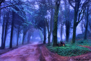 A Path to Eternity for Jocelyne... by Tigles1Artistry