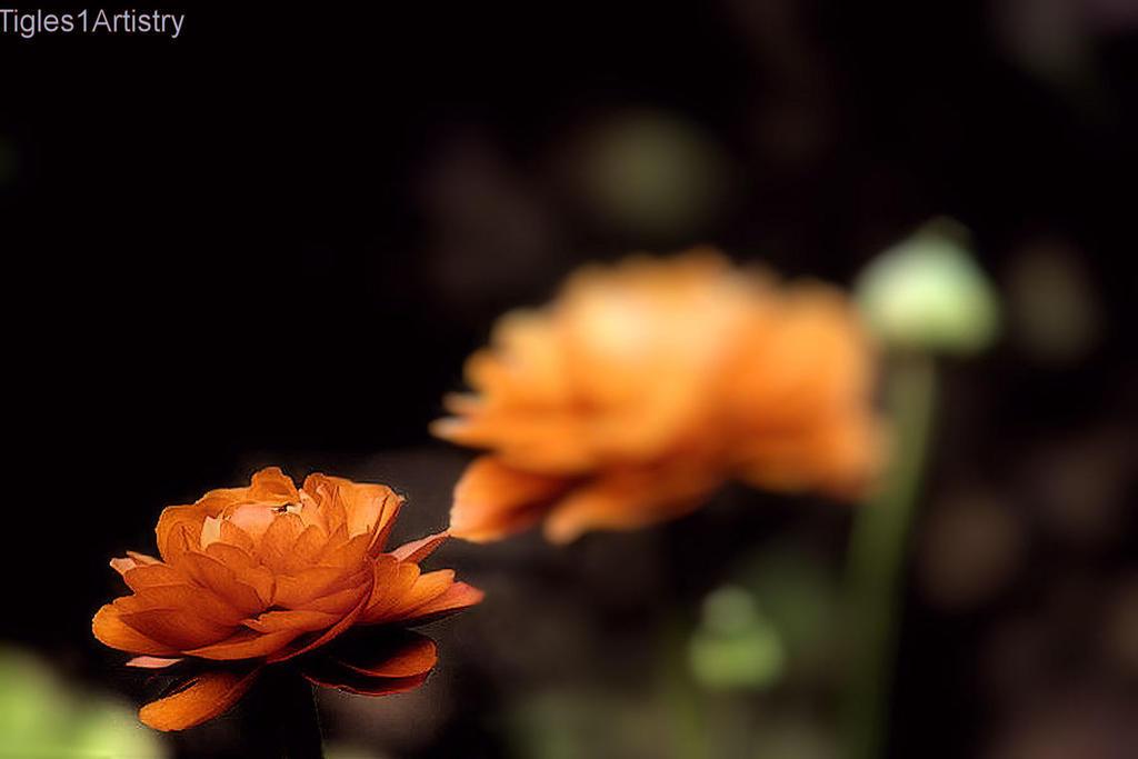 Spring Waltz..... by Tigles1Artistry
