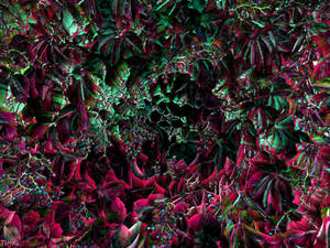 Hidden Gardens....