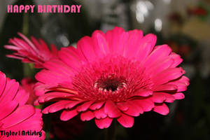 Happy Birthday To All My Friends Born In May