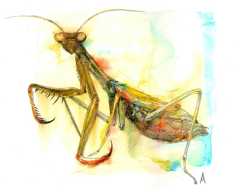 Mantis by ardentfem