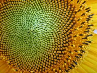 Sunflower by sPAce-siren