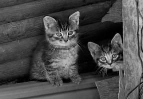 2 kittens by nnia