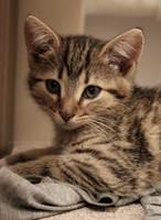 Sad Kitty by nnia