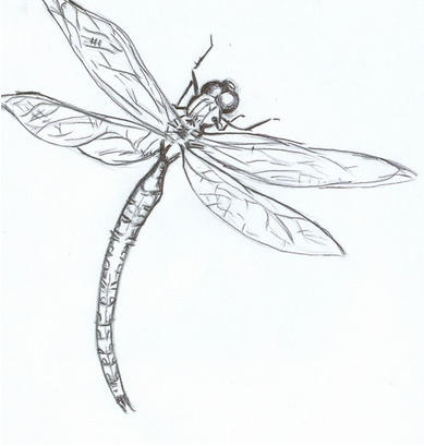 Dragonfly drawing template - photo#27