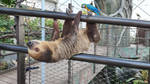 Sloth hanging out by haseeb312