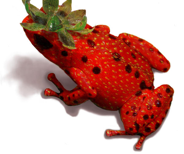 Strawberry frog by black-racoon