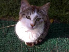 Fuzzy Cat by T4Del