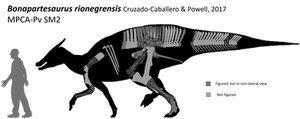 Bonapartesaurus rionegrensis by lythronax-argestes