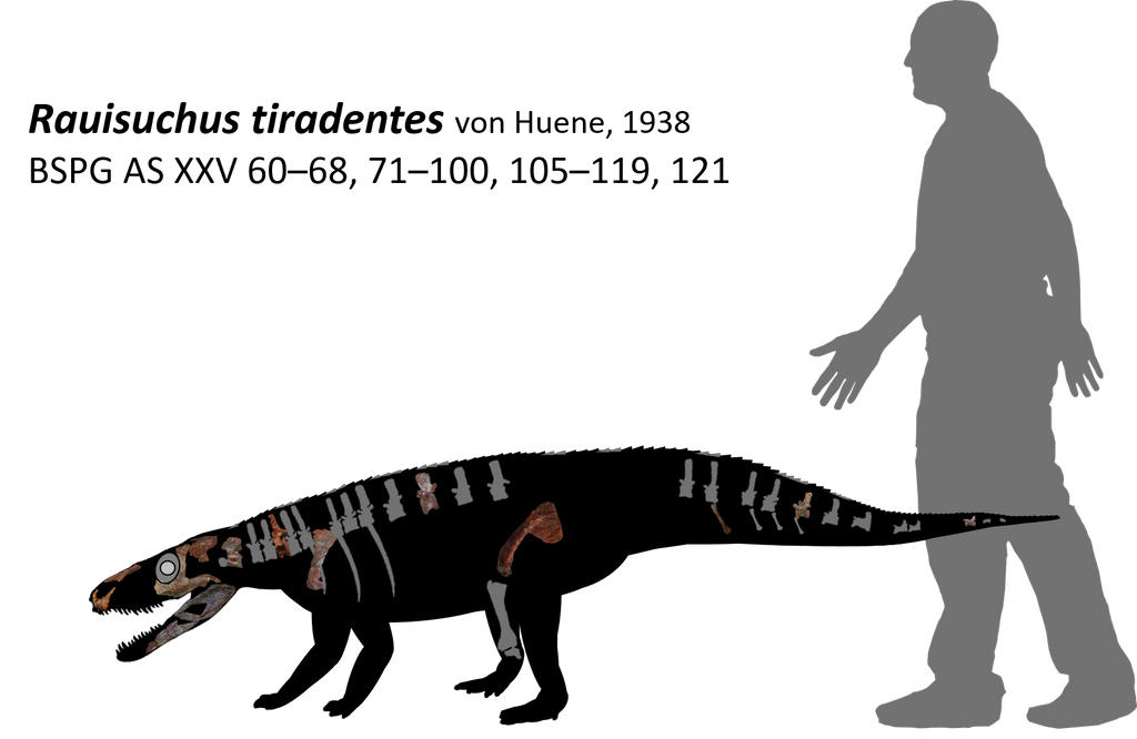 Rauisuchus tiradentes by lythronax-argestes