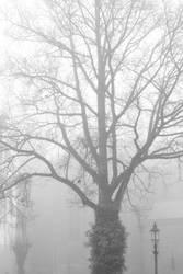 Misty II