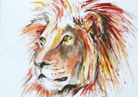 Lion by Kiriwana