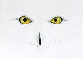 Hedwig by Kiriwana