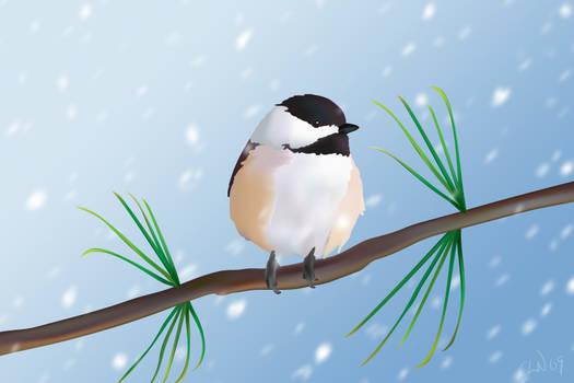 Snow Chickadee