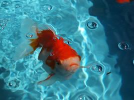 Goldfish by psym