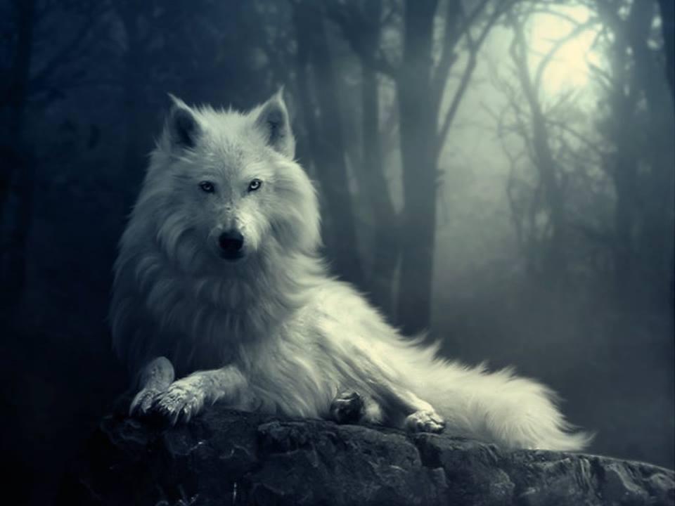 Miyuki Snow_wolf_by_indigobloom1-d6thbg5