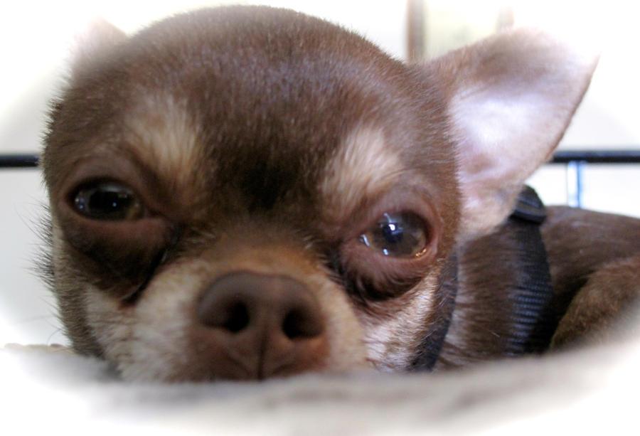 Puppy Love by JamminJo
