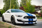Blue on White Shelby GT350