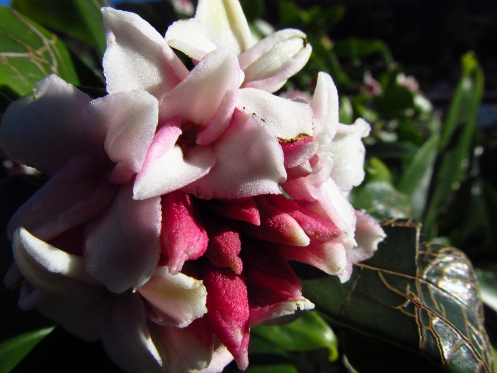 Little Bloom by Recktoffin