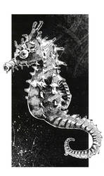 pen and ink sea horse