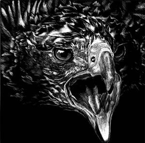 scratchboard eagle