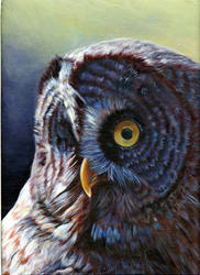 owl in acrylic