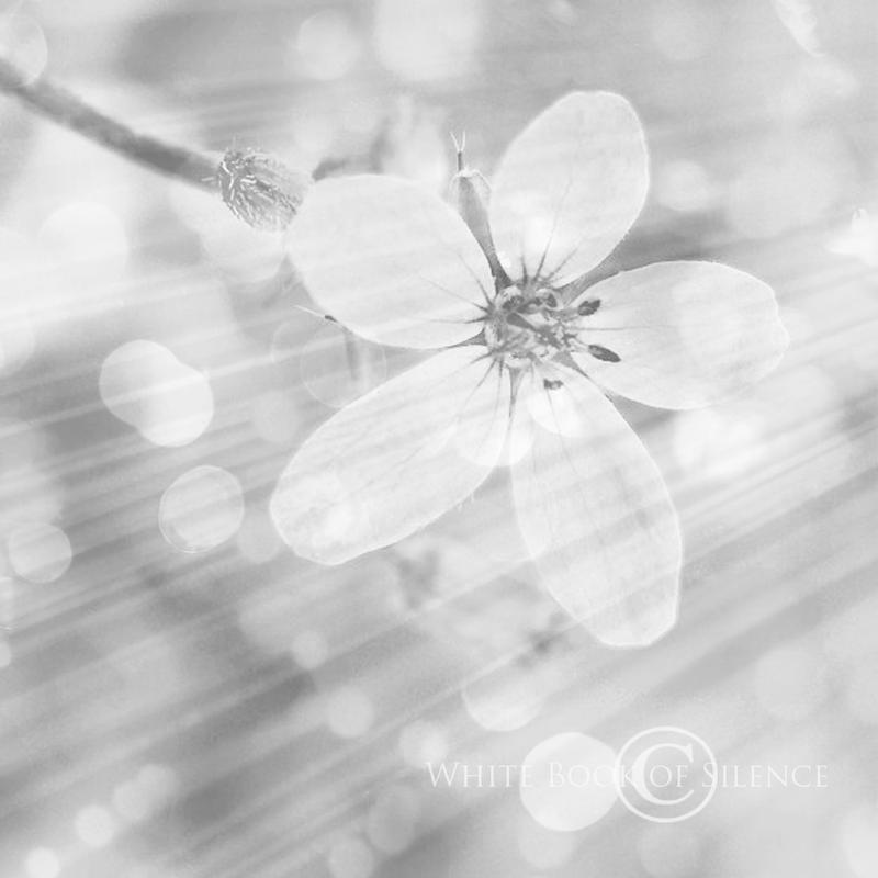 Mist of Spring