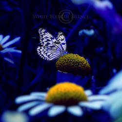 Butterfly dream... by WhiteBook