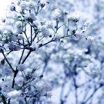 Purifying Rain by WhiteBook