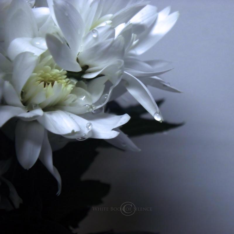 Little Tresures... by WhiteBook