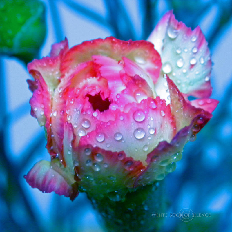 Carnation Revolution by WhiteBook