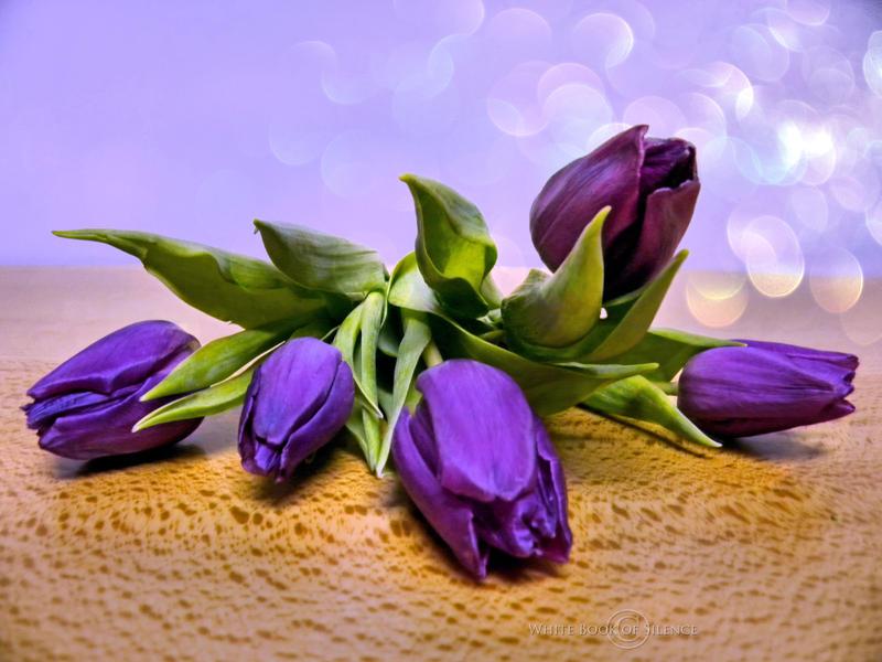 Purple Tulips by WhiteBook