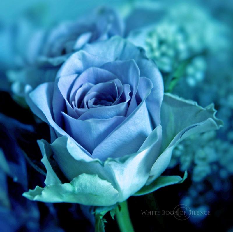 Blue Velvet by WhiteBook