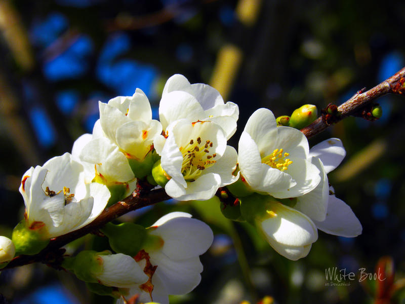 Blooming with Joy by WhiteBook