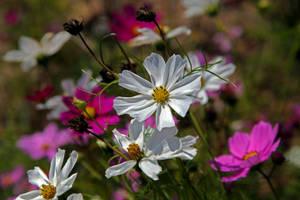 Autumn Garden by WhiteBook