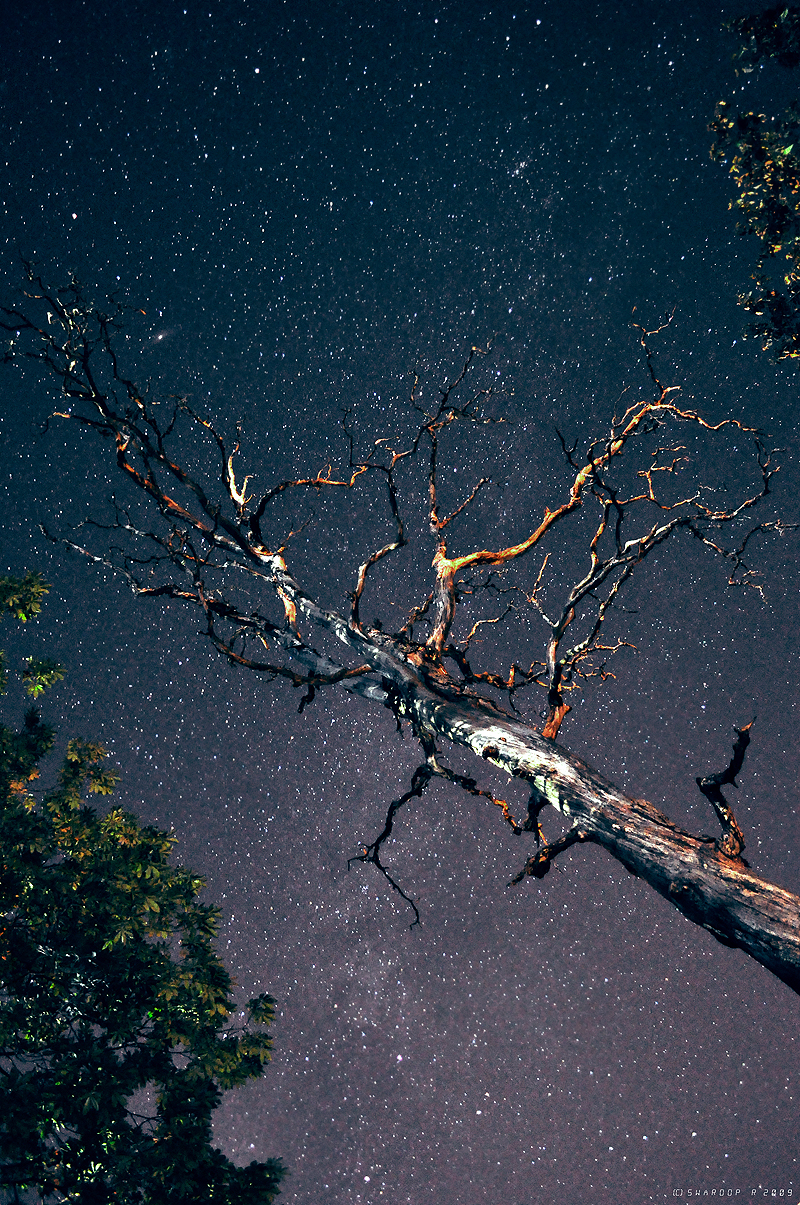 Galaxy stars and dead tree by Swaroop