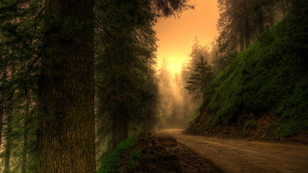 Waking Walking meditation