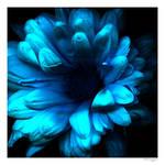 Flower from twilight zone