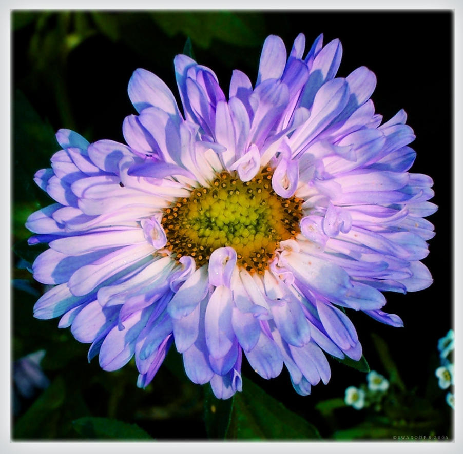Why bloom at night by swaroop on deviantart - Flowers that bloom only at night ...