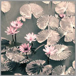 Lotuses from another age