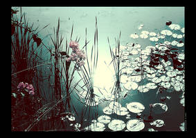 Shimmery nymphaea by Swaroop