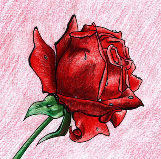 A single Red Rose by ladyz0e