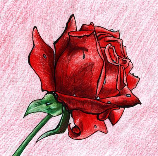 A single Red Rose by ladyz0e