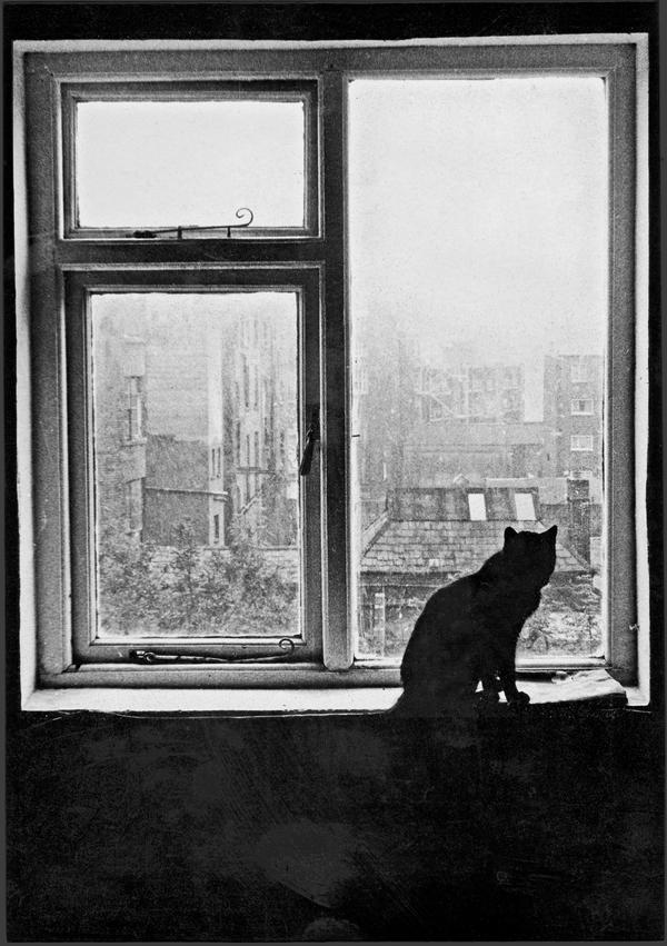 Beth's Cat by Elizamac