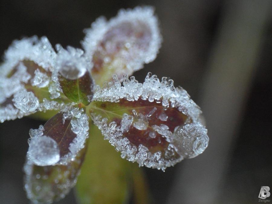 frozen by IndianRain